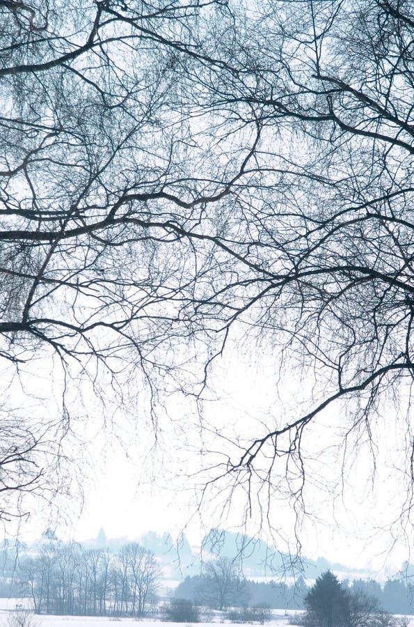 Download χειμώνας στοκ εικόνες. εικόνα από πρωί, ήλιος, πρώτα, χρόνος - 377266