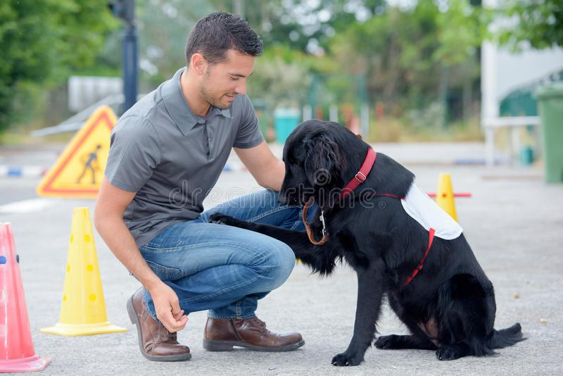 Χειριστής σκυλιών στην εργασία στοκ εικόνες