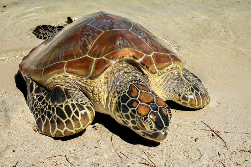 Χελώνα που λούζεται στον ήλιο στοκ φωτογραφία με δικαίωμα ελεύθερης χρήσης