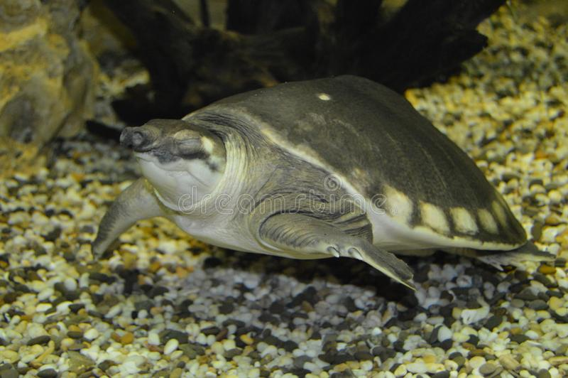 Χελώνα στοκ φωτογραφία με δικαίωμα ελεύθερης χρήσης