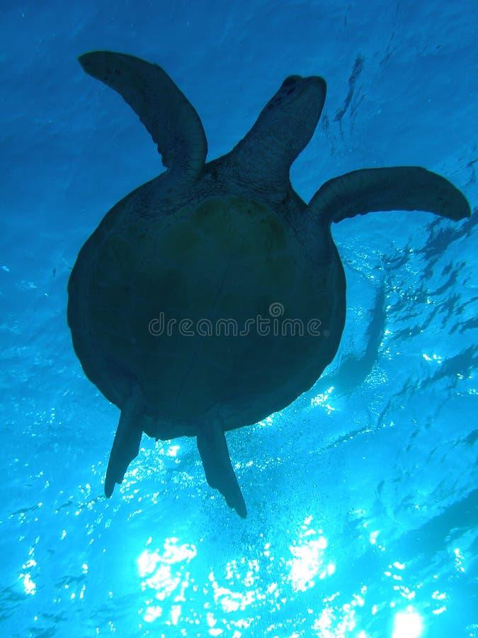 χελώνα sillhouette στοκ εικόνες