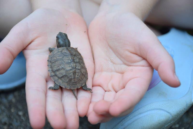 Χελώνα μωρών εκμετάλλευσης παιδιών στοκ φωτογραφία με δικαίωμα ελεύθερης χρήσης