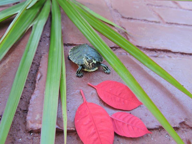 Χελώνα στο κόκκινο στοκ φωτογραφία με δικαίωμα ελεύθερης χρήσης