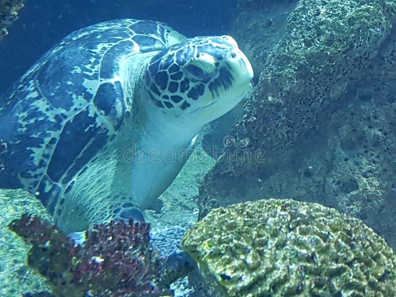 Χελώνα ‹â€ ‹θάλασσας †στοκ φωτογραφίες