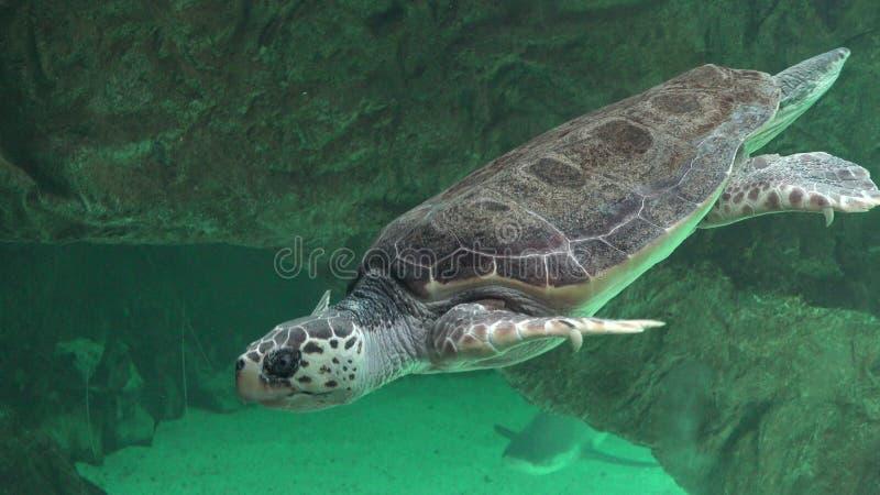 Χελώνες θάλασσας και άλλη θαλάσσια ζωή στοκ φωτογραφία