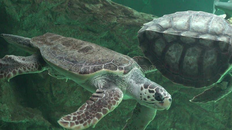 Χελώνες θάλασσας και άλλη θαλάσσια ζωή στοκ εικόνες με δικαίωμα ελεύθερης χρήσης