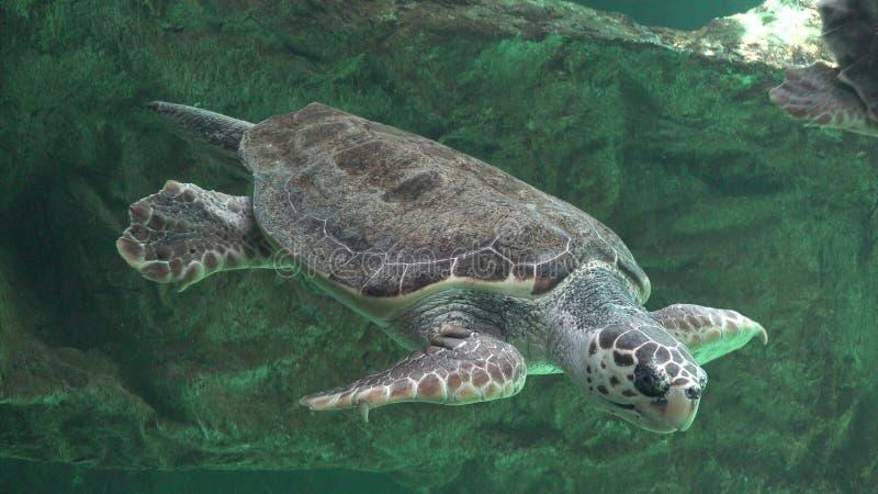 Χελώνες θάλασσας και άλλη θαλάσσια ζωή στοκ φωτογραφία με δικαίωμα ελεύθερης χρήσης