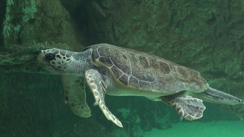 Χελώνες θάλασσας και άλλη θαλάσσια ζωή στοκ εικόνα με δικαίωμα ελεύθερης χρήσης