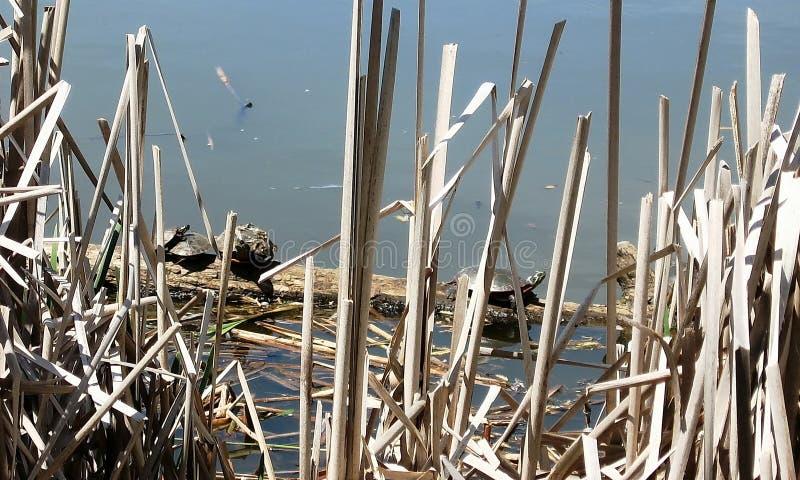 Χελώνες 2007 Thornhill στοκ φωτογραφία