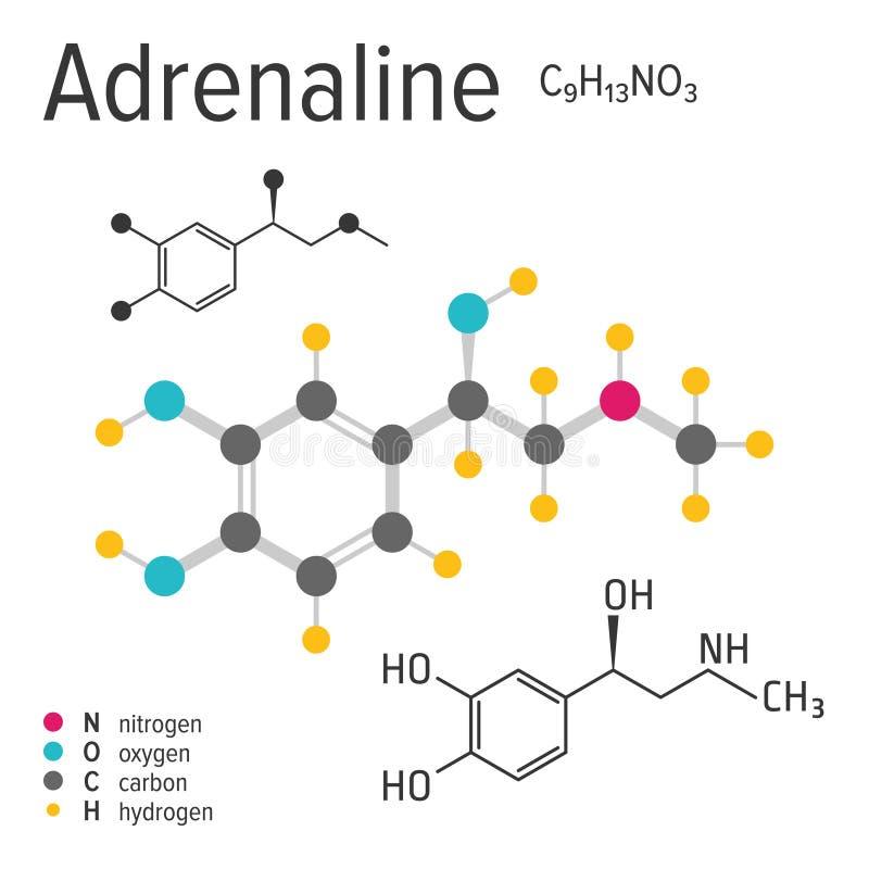 Χημικός τύπος του διανυσματικού μορίου αδρεναλίνης διανυσματική απεικόνιση