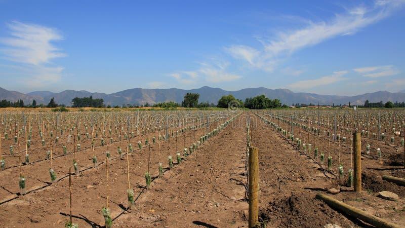 Χιλή 2015 στοκ φωτογραφίες με δικαίωμα ελεύθερης χρήσης