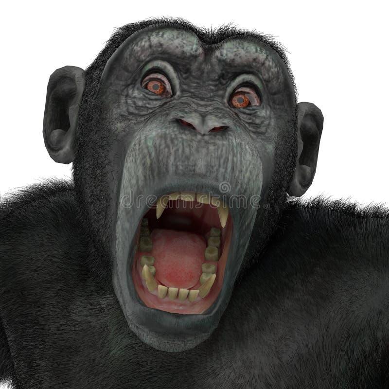 Χιμπατζής σε ένα άσπρο υπόβαθρο απεικόνιση αποθεμάτων