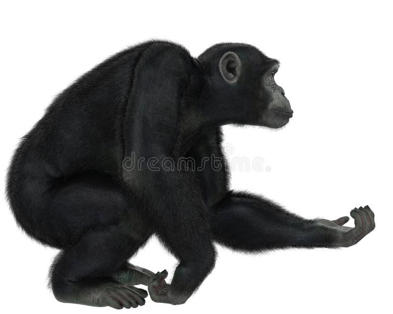 Χιμπατζής σε ένα άσπρο υπόβαθρο διανυσματική απεικόνιση