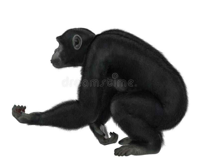 Χιμπατζής σε ένα άσπρο υπόβαθρο ελεύθερη απεικόνιση δικαιώματος