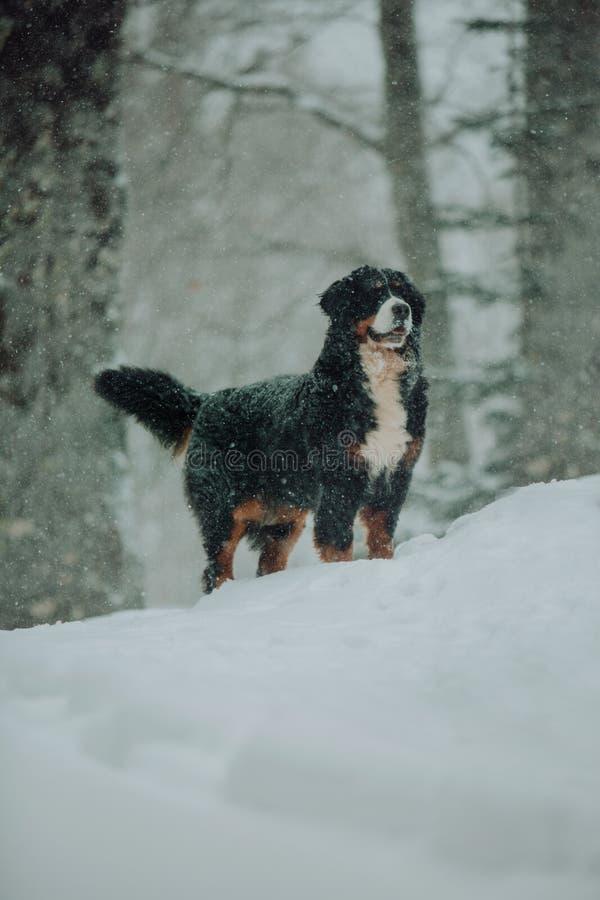 Χιονίζοντας αστικό τοπίο με τη διάβαση σκυλιών, υπαίθρια στοκ εικόνα με δικαίωμα ελεύθερης χρήσης