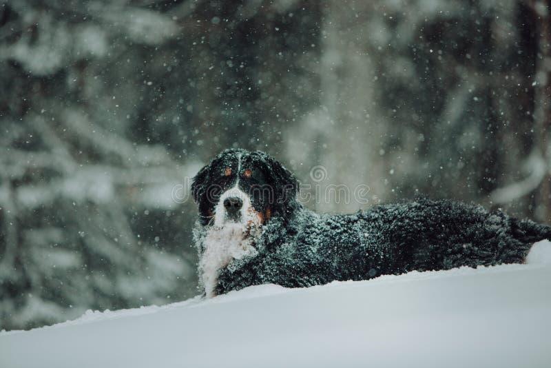 Χιονίζοντας αστικό τοπίο με τη διάβαση σκυλιών, υπαίθρια στοκ φωτογραφία με δικαίωμα ελεύθερης χρήσης