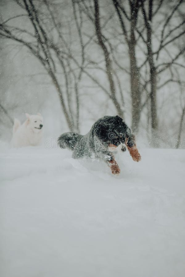 Χιονίζοντας αστικό τοπίο με τη διάβαση σκυλιών, υπαίθρια στοκ εικόνες