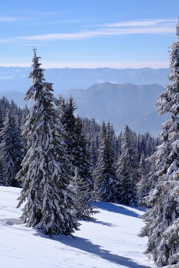 Χιονισμένα δέντρα και δάσος στοκ εικόνες με δικαίωμα ελεύθερης χρήσης