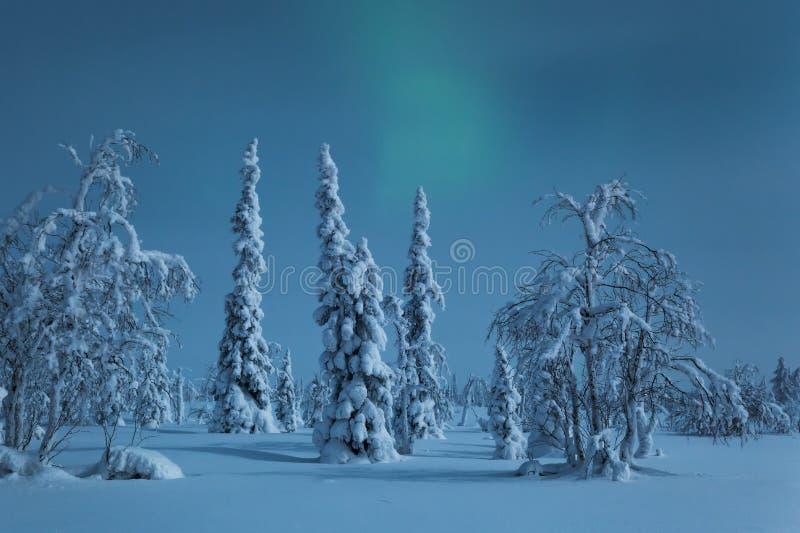 Χιονισμένα δέντρα στο σεληνόφωτο με τα μόλις ορατά βόρεια φω'τα στοκ εικόνες