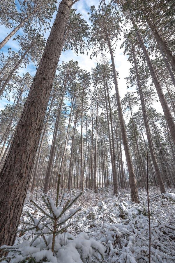 Χιονισμένα ξύλα - όμορφα δάση κατά μήκος των αγροτικών δρόμων στοκ φωτογραφίες με δικαίωμα ελεύθερης χρήσης