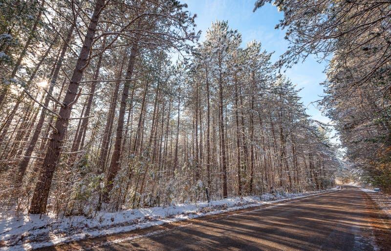 Χιονισμένα ξύλα - όμορφα δάση κατά μήκος των αγροτικών δρόμων στοκ εικόνες