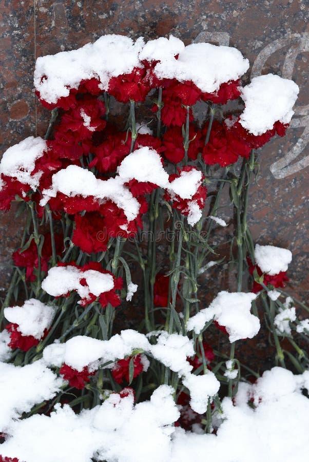 Χιονισμένα λουλούδια στοκ εικόνες με δικαίωμα ελεύθερης χρήσης