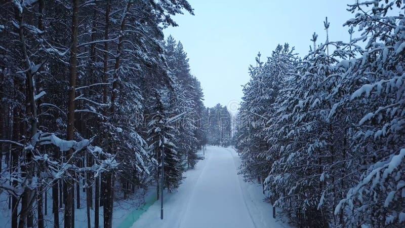 Χιονισμένη πορεία στο πάρκο με τα φανάρια r Η αλέα χειμερινών πάρκων με το δρόμο περιέβαλε τα υψηλά δέντρα που καλύφθηκαν από το  στοκ φωτογραφία με δικαίωμα ελεύθερης χρήσης