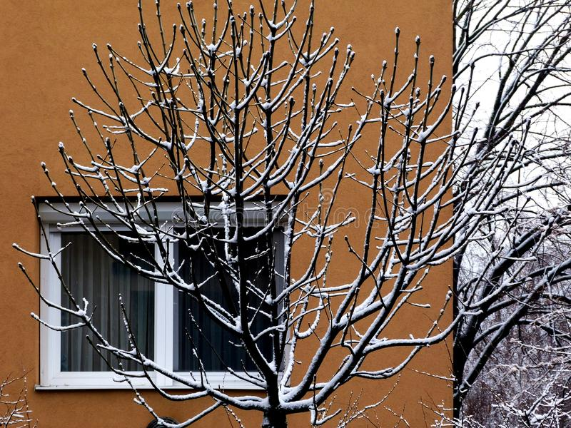 Χιονισμένοι κλάδοι δέντρων μπροστά από το μπεζ κτήριο στοκ εικόνα