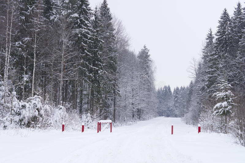 Χιονισμένος δρόμος μέσω των χειμερινών ξύλων στοκ φωτογραφίες με δικαίωμα ελεύθερης χρήσης