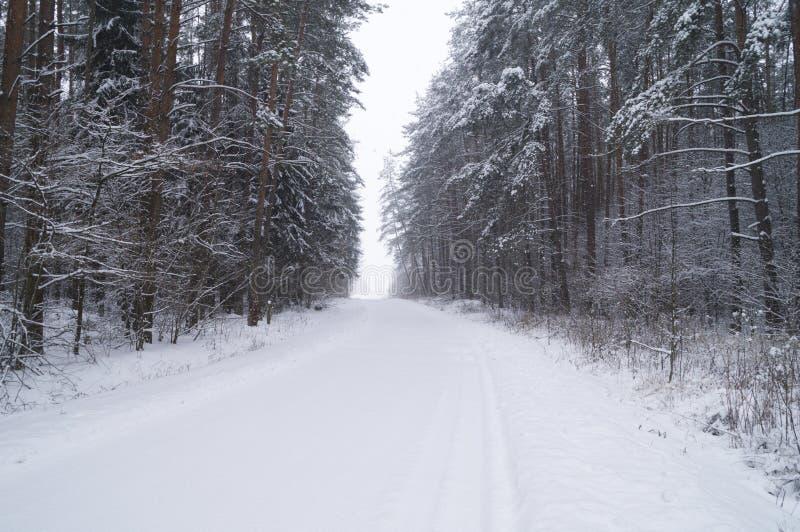 Χιονισμένος δρόμος σε ένα δάσος πεύκων στοκ εικόνες