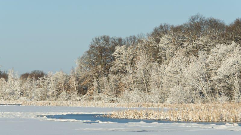 Χιονισμένος υγρότοπος στοκ εικόνα