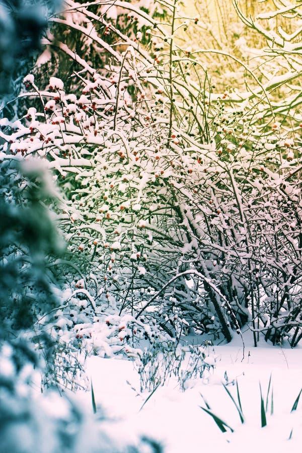 Χιονισμένο δάσος εγκαταστάσεων δέντρων στο χειμερινό φίλτρο, επίδραση Natur στοκ φωτογραφία