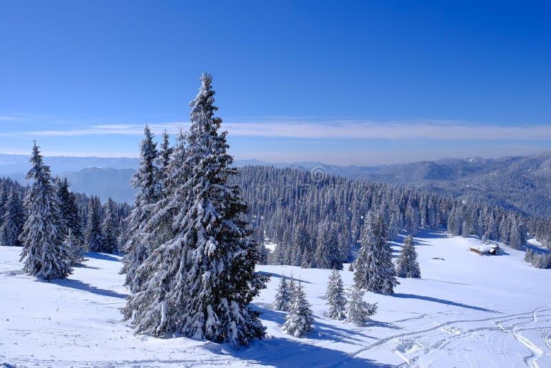 Χιονισμένο δάσος στο χιόνι στοκ φωτογραφία με δικαίωμα ελεύθερης χρήσης