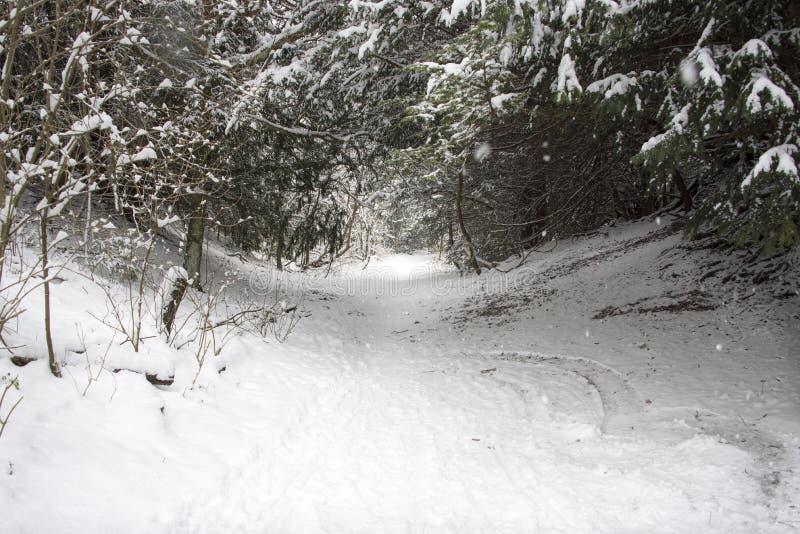 Χιονισμένο δασόβιο μονοπάτι στοκ φωτογραφία με δικαίωμα ελεύθερης χρήσης