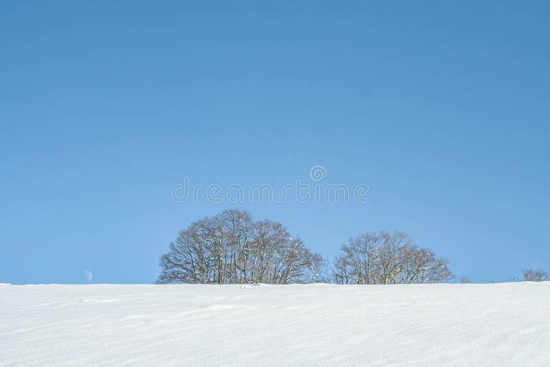 Χιονισμένο χειμερινό τοπίο με δέντρα σε καθαρή μέρα στοκ φωτογραφία
