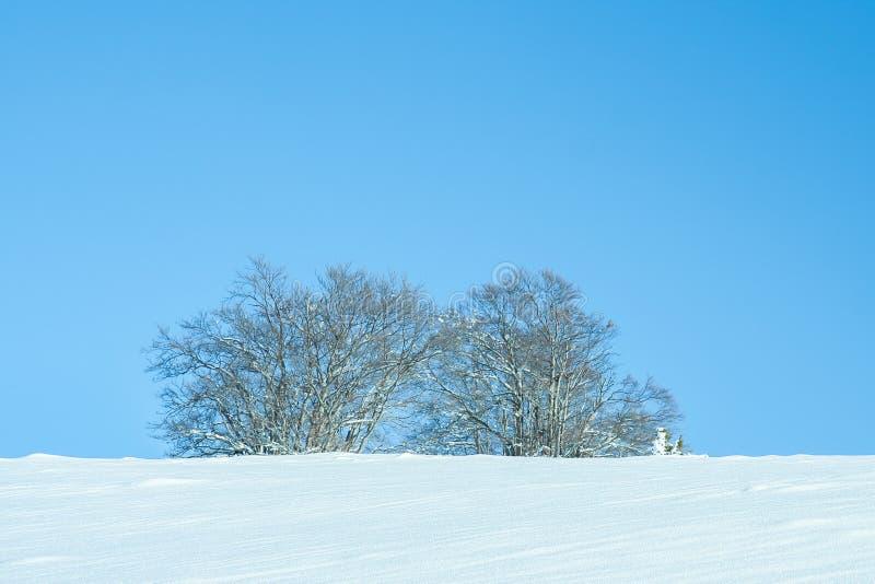 Χιονισμένο χειμερινό τοπίο με δέντρα στοκ φωτογραφίες