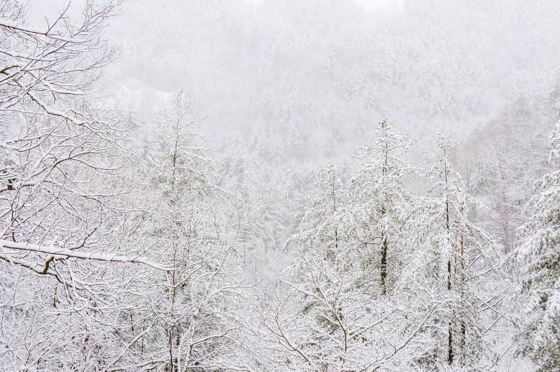 Χιονοθύελλα στο εθνικό δρυμός Chattahoochee στοκ φωτογραφία