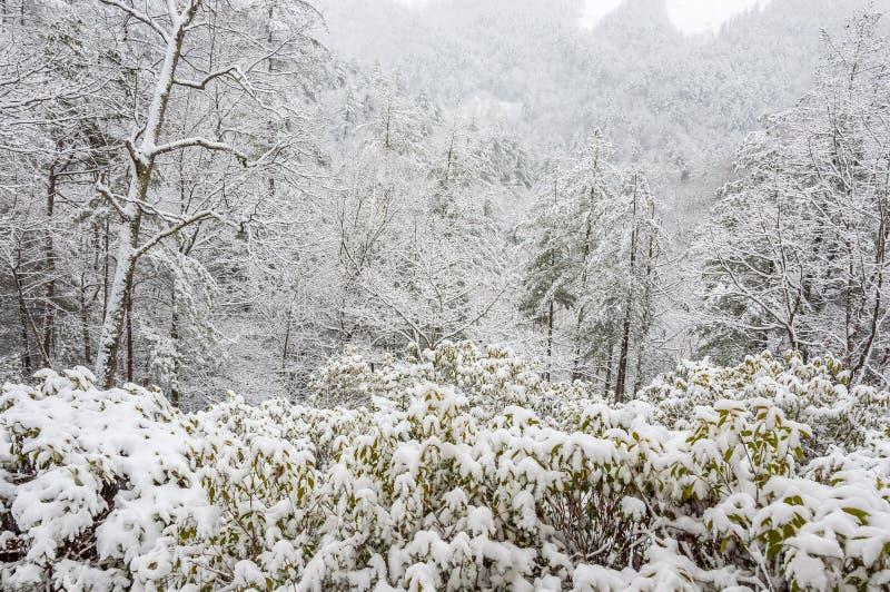 Χιονοθύελλα στο εθνικό δρυμός Chattahoochee στοκ εικόνα με δικαίωμα ελεύθερης χρήσης