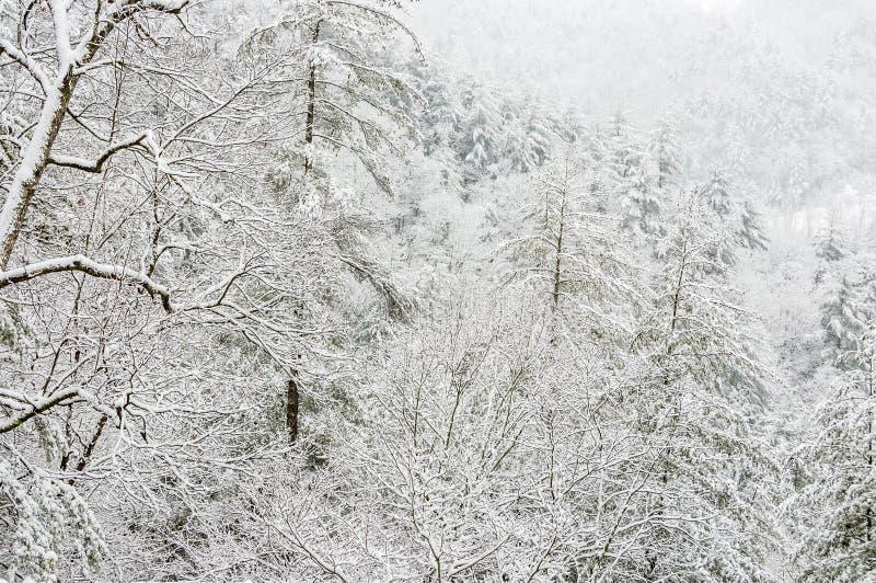 Χιονοθύελλα στο εθνικό δρυμός Chattahoochee στοκ εικόνα