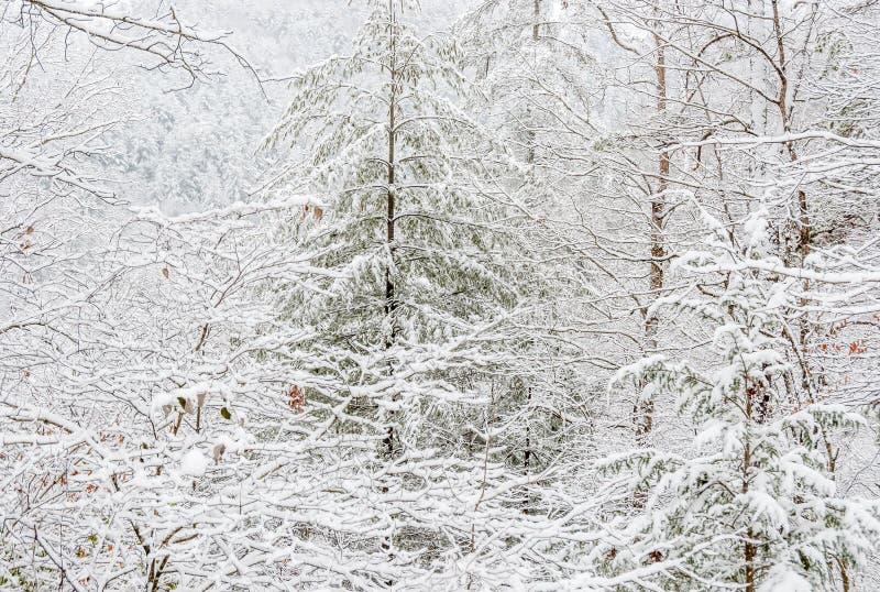 Χιονοθύελλα στο εθνικό δρυμός Chattahoochee στοκ φωτογραφία με δικαίωμα ελεύθερης χρήσης
