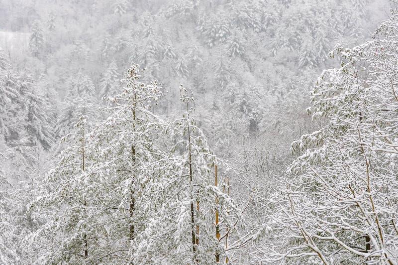 Χιονοθύελλα στο εθνικό δρυμός Chattahoochee στοκ φωτογραφίες