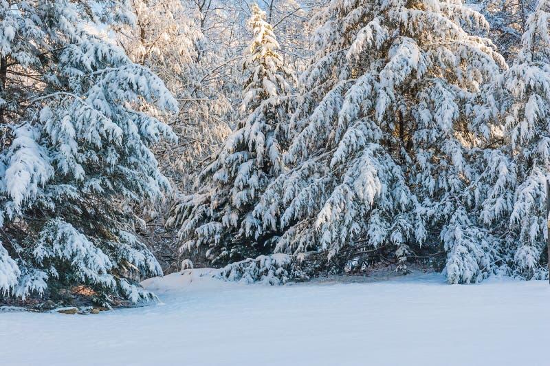 Χιονοθύελλα στο εθνικό δρυμός Chattahoochee στοκ φωτογραφίες με δικαίωμα ελεύθερης χρήσης
