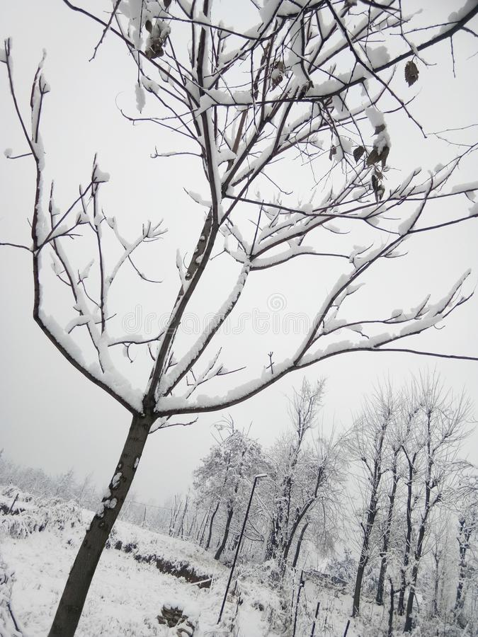 Χιονοπτώσεις στην ινδία στοκ εικόνες με δικαίωμα ελεύθερης χρήσης