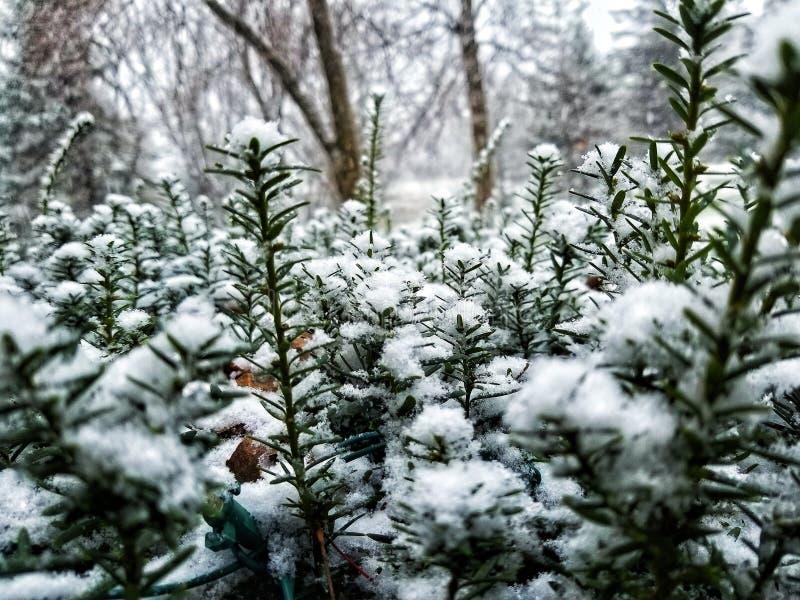 Χιονώδεις αιχμές! στοκ εικόνες