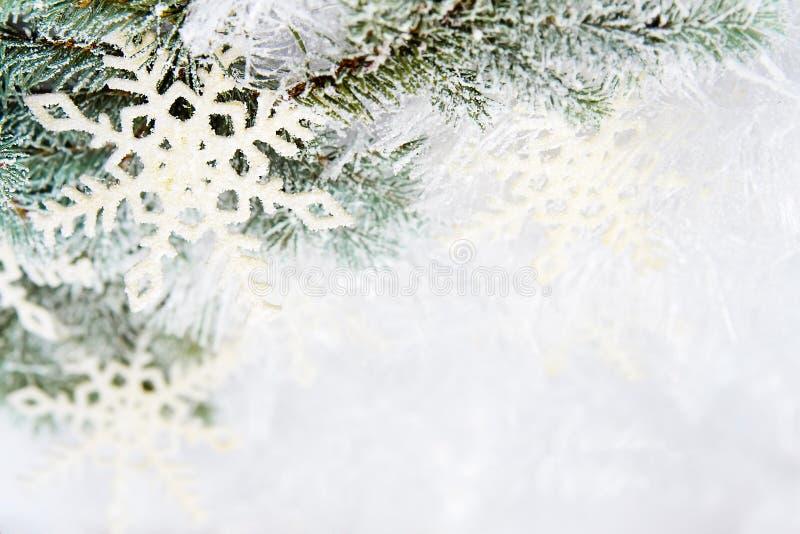 Χιονώδεις κομψοί κλάδοι στοκ φωτογραφία