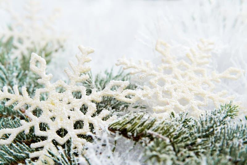 Χιονώδεις κομψοί κλάδοι στοκ εικόνες