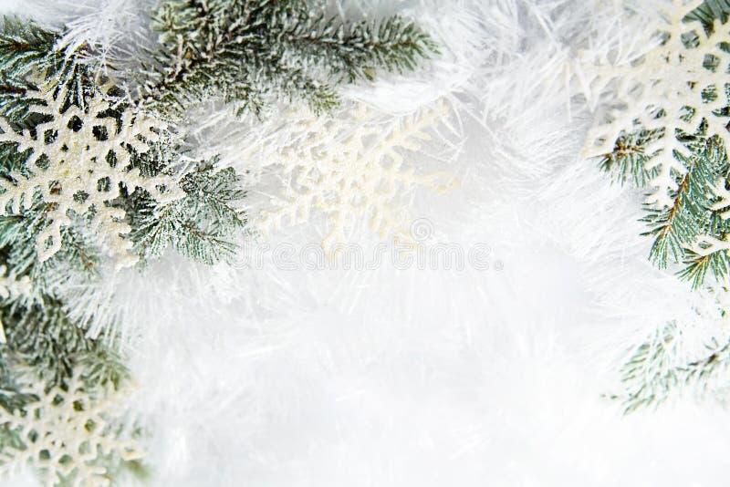 Χιονώδεις κομψοί κλάδοι στοκ εικόνες με δικαίωμα ελεύθερης χρήσης