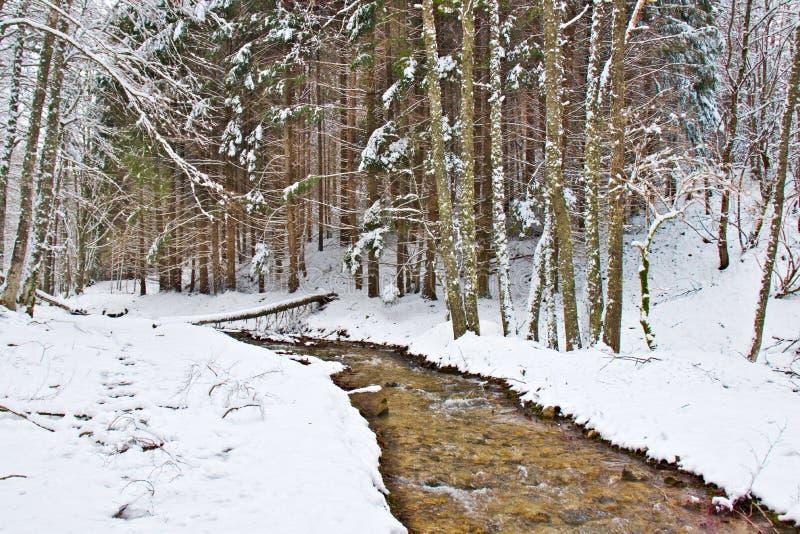 Χιονώδες δάσος οξιών και πεύκων στα τέλη του χειμώνα, εθνικό πάρκο Sila, Καλαβρία, νότια Ιταλία στοκ φωτογραφίες με δικαίωμα ελεύθερης χρήσης