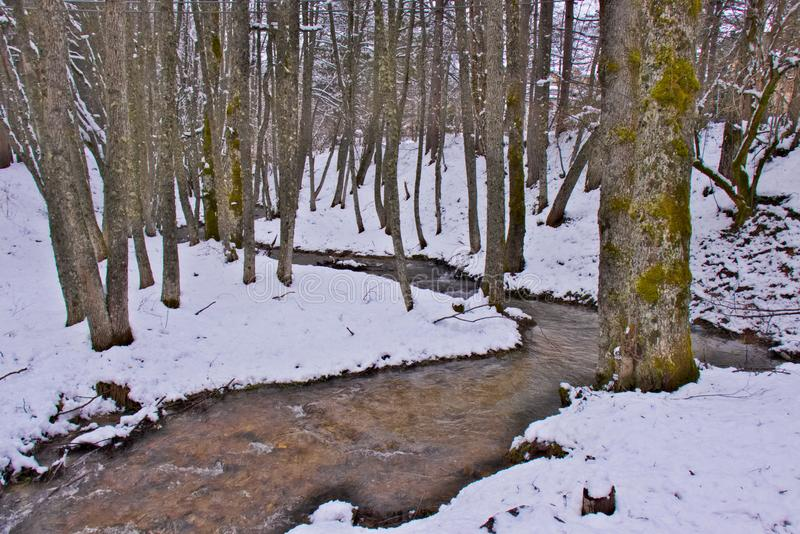 Χιονώδες δάσος οξιών και πεύκων στα τέλη του χειμώνα, εθνικό πάρκο Sila, Καλαβρία, νότια Ιταλία στοκ εικόνα