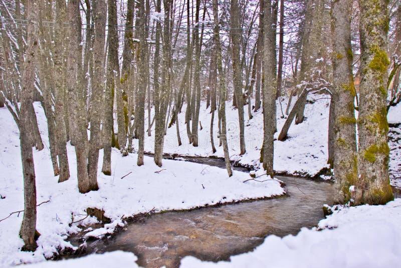 Χιονώδες δάσος οξιών και πεύκων στα τέλη του χειμώνα, εθνικό πάρκο Sila, Καλαβρία, νότια Ιταλία στοκ εικόνες